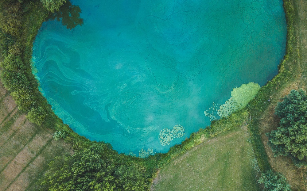 Blue Green Algae Confirmed In Seguin Armour My Muskoka Now
